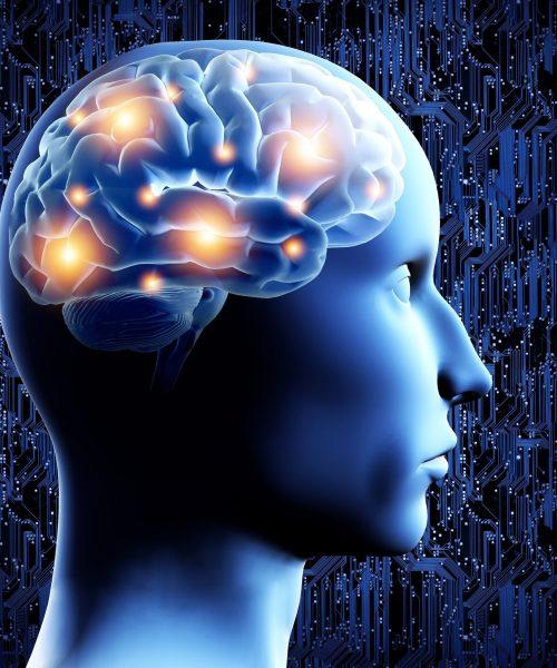 18156662 - brain - 3d illustration.